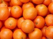 продаем мандарины оптом без посредников