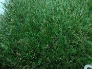 газон искусственный, 30мм-Ландшафт (3500тг/м2), Спорт -2500тг/м2, рулон 2