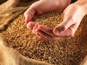 В продаже качественное фуражное зерно.